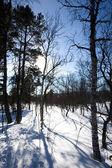Rural esqui — Foto Stock