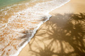 Palm Tree Shadow in Tropics — Stock fotografie