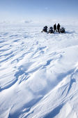 Snowmobile Expedition — Stock Photo
