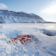 Seal Hunt - Stock Photo