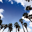Palm Tree Background — Stock Photo