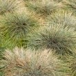 Green Grass Abstract - Stock Photo