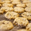 Chocolate Chip Cookie - Stockfoto