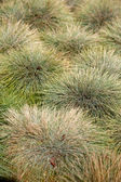 Green Grass Abstract — Stock Photo