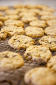 Chocolate chip cookie — Stockfoto