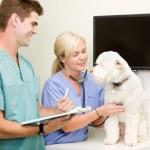 Dog Vet Check-Up — Stock Photo