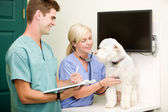 Dog Vet Check-Up — Stock Photo