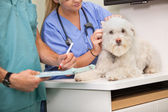 Vet and assistant examining dog — Stock Photo