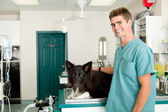 Vet Clinic — Stock Photo