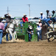 Calf Roping - Stock Photo
