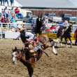Saddle Bronc — Stock Photo #5722469