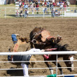 Saddle Bronc — Stock Photo #5722474