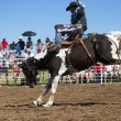 Saddle Bronc — Stock Photo