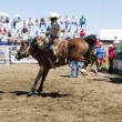 Saddle Bronc - Stock Photo