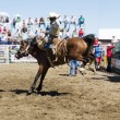 Saddle Bronc — Stock Photo #5722499