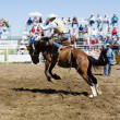 Saddle Bronc — Stock Photo #5722506