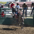Saddle Bronc — Stockfoto