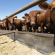 Stock Photo: Feeding Bunks