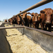 Feeding Bunks — Stock Photo