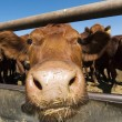 Feeding Bunks - Stock Photo