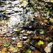 Wet Leaves Reflection - Foto Stock