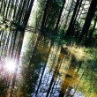 Forest Reflection — Stock Photo