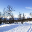 Cross Country Ski Trail - Stock Photo