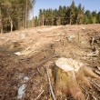 Clearcut Block - Stock Photo