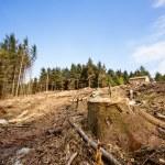 Tree Stump — Stock Photo