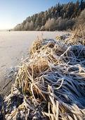 Krajobraz jeziora w zimie — Zdjęcie stockowe