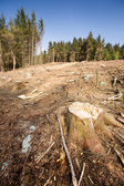 Clearcut Block — Stock Photo