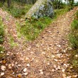 Stock Photo: Path Split