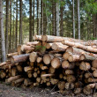 Forestry - Stock Photo
