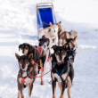 Dog Sled — Foto Stock