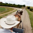 Horse and Buggy — Stock Photo #5732689