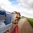 Horse and Cart — Stock Photo #5732690