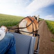 Horse and Cart — Stock Photo #5732691