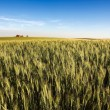 Prairie Farmland — Stock Photo