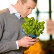 Fresh Basil - Stock Photo