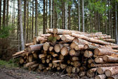 Forestry — Stock Photo