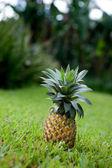 Ananas fresco — Foto Stock