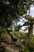 Tropical Mountain Trail — Stock Photo