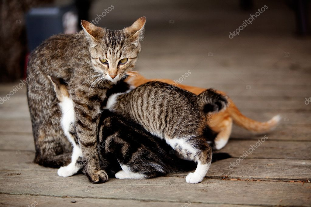 A cat with many nursing kittens — Stock Photo #5732686