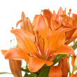 Flowers orange tiger lilies — Lizenzfreies Foto