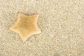 Starfish on the sand — Stock Photo