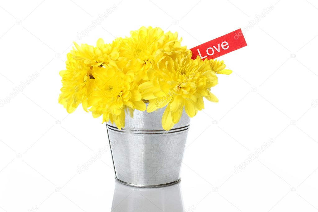 Yellow chrysanthemums in a bucket in the colors of card with the text love.  Isolated — Stock Photo #5519212