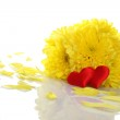 Yellow chrysanthemums with two red hearts — Stock Photo