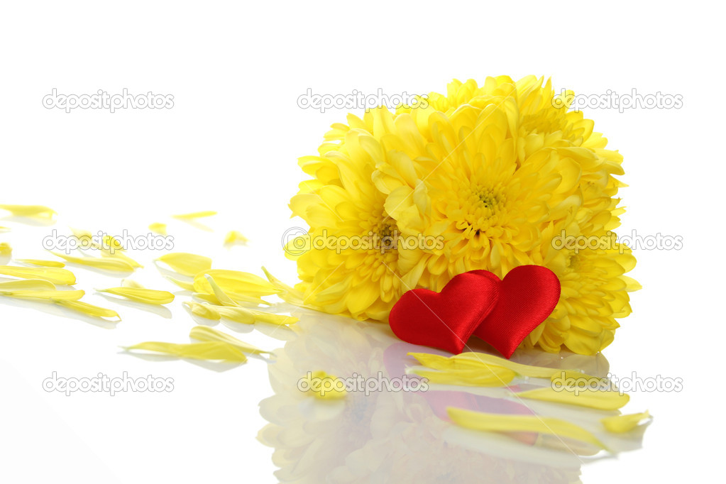 Yellow chrysanthemums with two red hearts. Gift. Isolated on white background — Stock Photo #5571720
