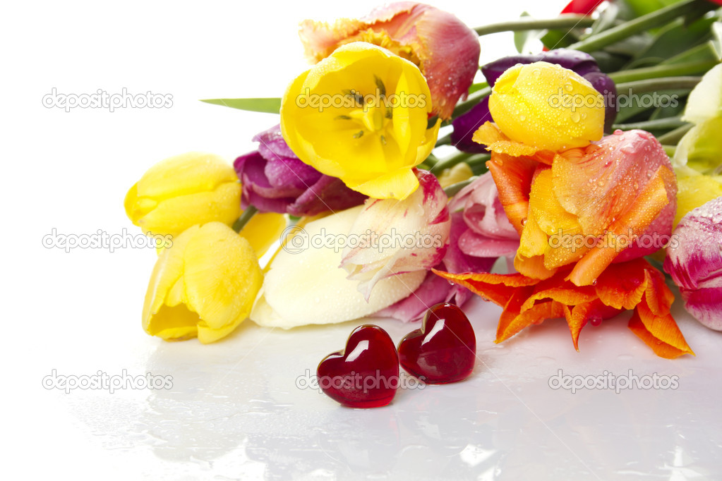 Lovely spring colored tulips with water drops lie in the bouquet in the foreground of the two red glass hearts. Isolated  Stock Photo #5702403