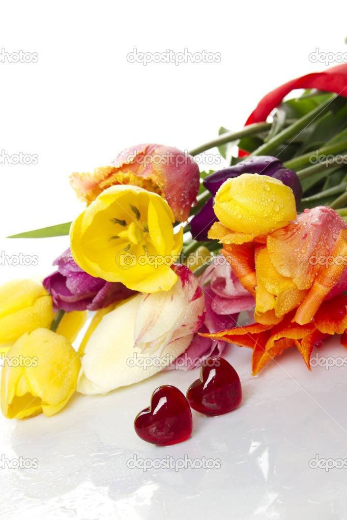 Lovely spring colored tulips with water drops lie in the bouquet in the foreground of the two red glass hearts. Isolated  Stock Photo #5852109